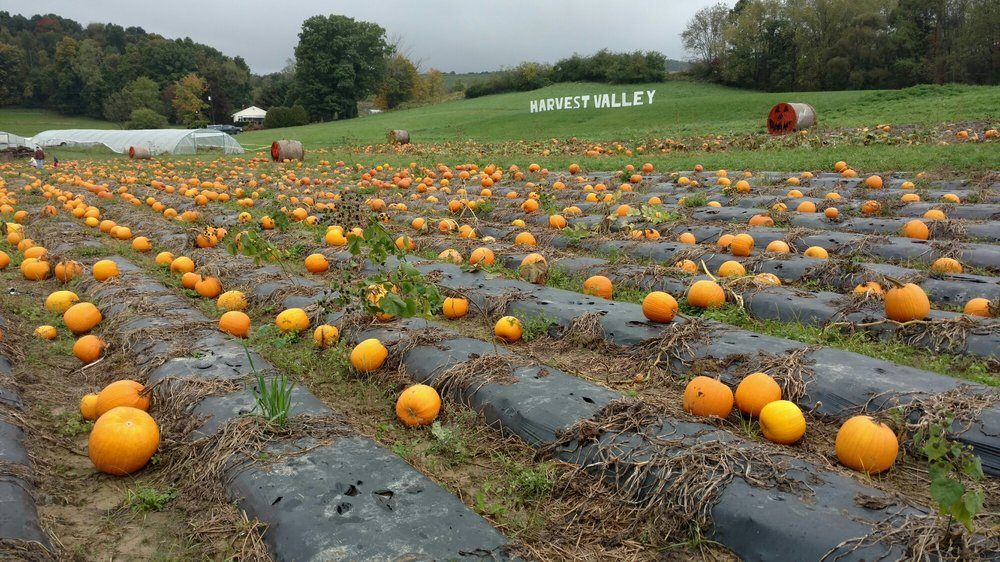 Harvest Valley Farms: 6003 Cunningham Rd, Gibsonia, PA