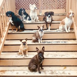 Pawprints By Penny 18 Photos Pet Groomers 1245 Niagara St
