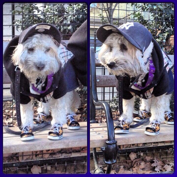 Washington Square Park Dog Run