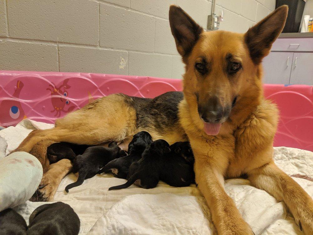 Take Me Home Pet Rescue: 561 W Campbell Rd, Richardson, TX