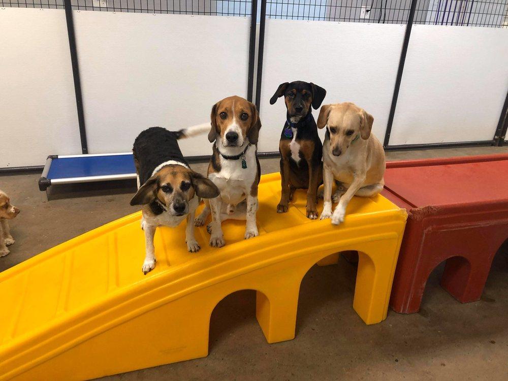 Puppywood Pet Resort: 7863 Beechmont Ave, Cincinnati, OH