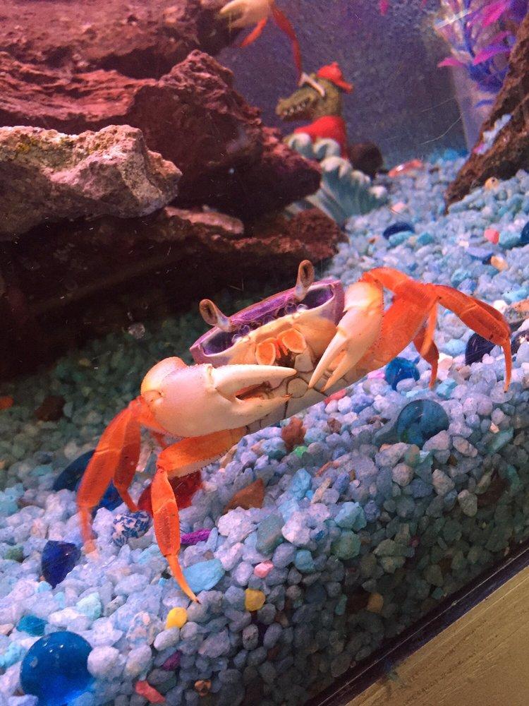 Trop aquarium 24 photos 48 reviews pet stores 3125 for Fish store las vegas