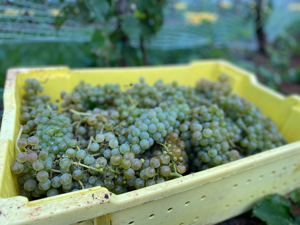 Lovingston Winery: 885 Freshwater Cove Ln, Lovingston, VA