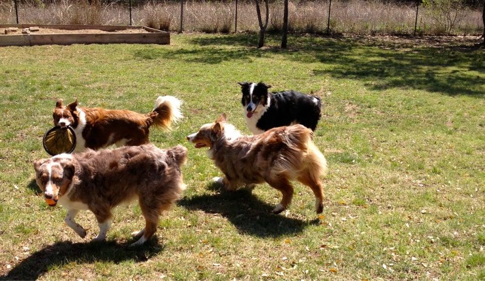 Dog Training Near Buda Tx