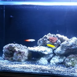 Image gallery ocean view tropical fish for Fish store miami