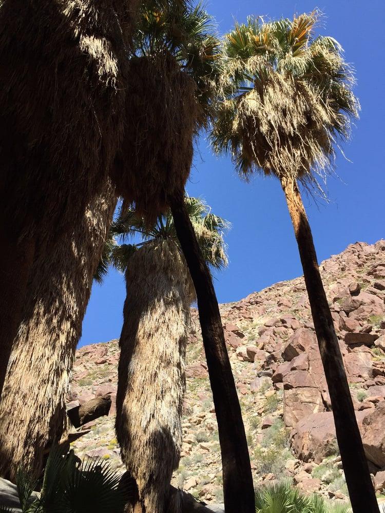 Palm Oasis Nice 3 Mile Hike Yelp