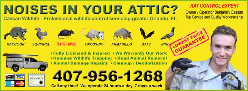Cassan Wildlife: Orlando, FL