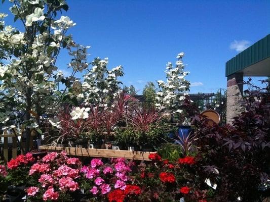 Earl May Nursery Garden Center Lukket Planteskoler Og Havearbejde 15060 W 135th St