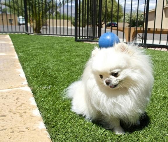 Sabino Canyon Pet Resort
