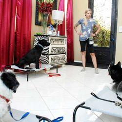 CORE Dog Training & Boarding - 35 Photos & 61 Reviews - Pet