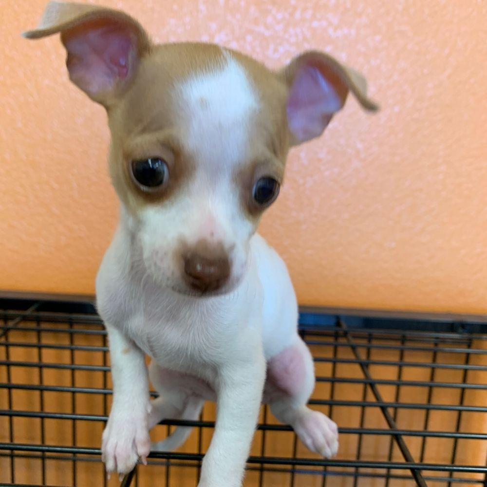 Crazzy Pet Grooming: 13001 Eastlake Blvd, El Paso, TX