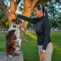 Island Dog Obedience - 87 Photos & 11 Reviews - Pet Training