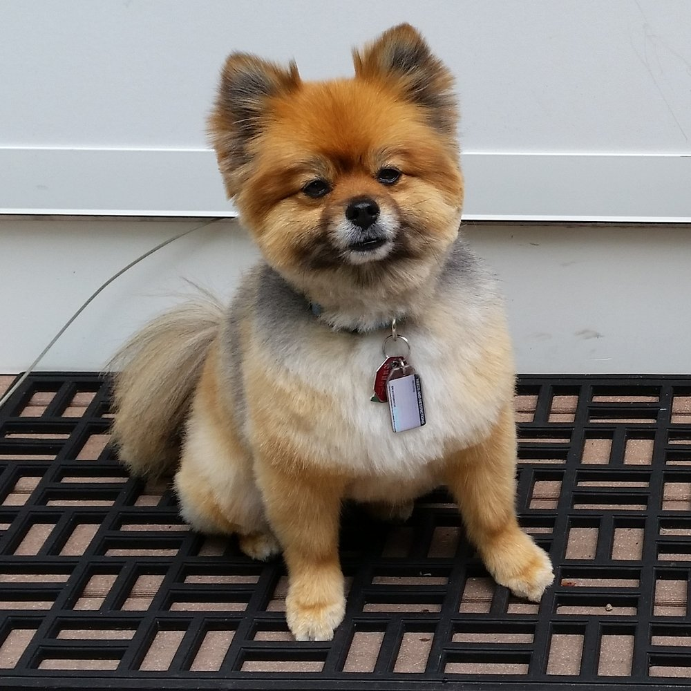 L Sweet Pet Grooming: 51 Branson Rd, Farmington, NH