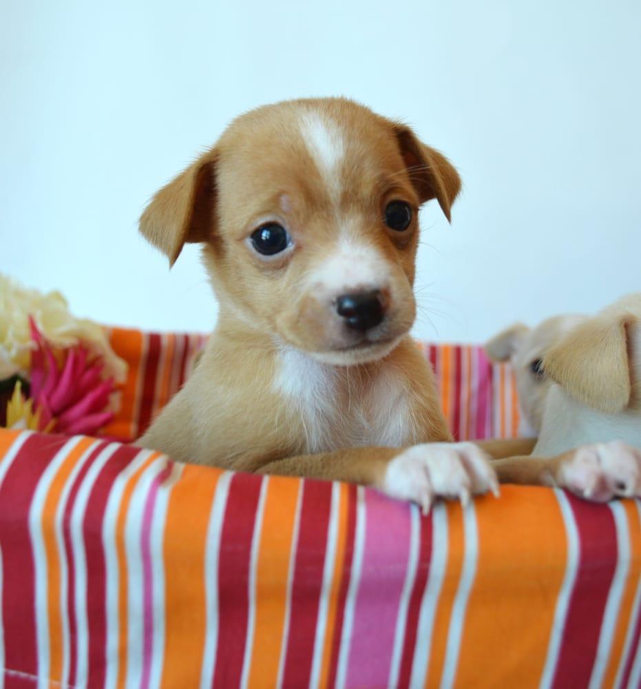 Pet Adoption Today