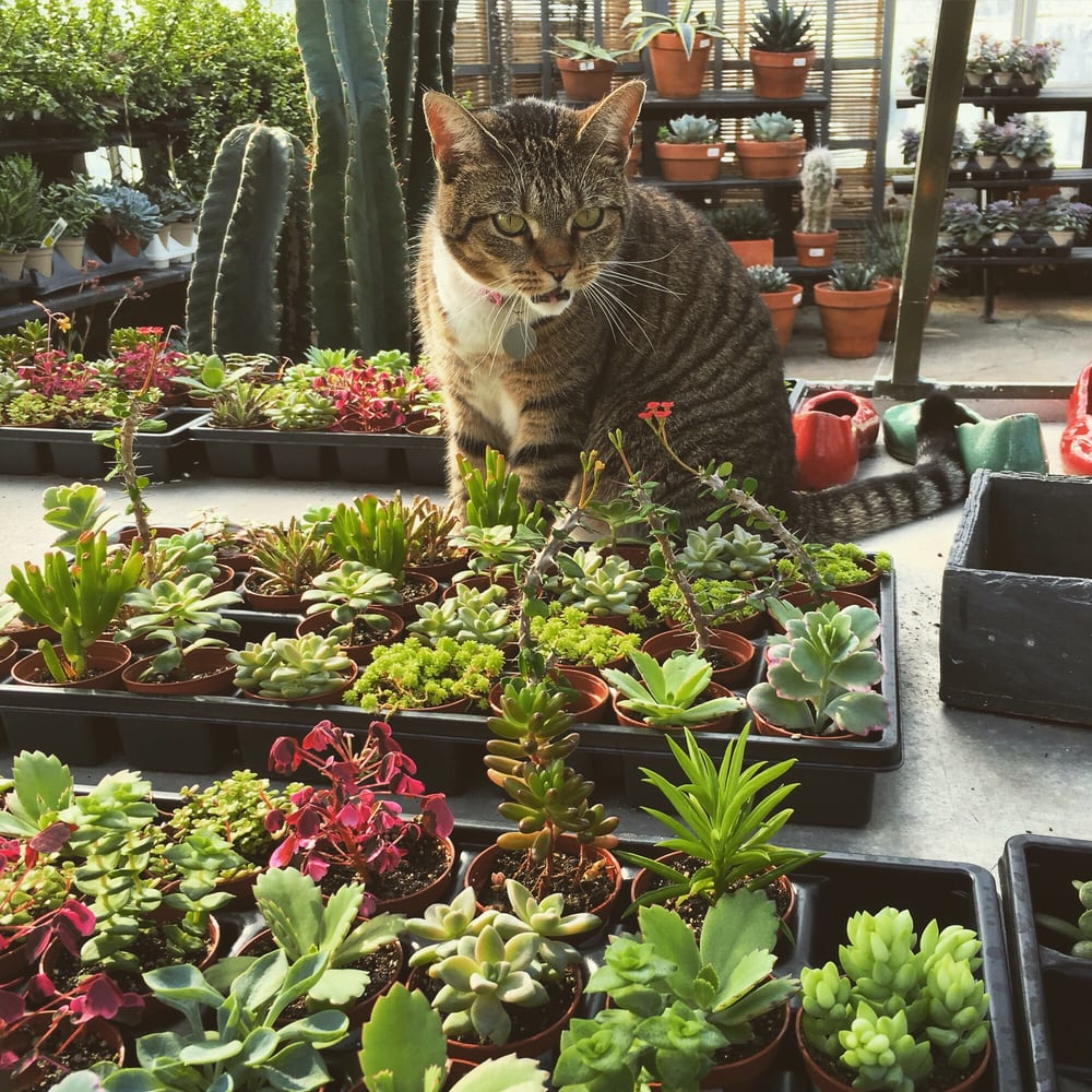 One Of Their Mascots Showing Me The Succulents Yelp