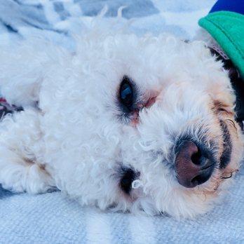 Newport Beach Animal Shelter Newport Beach Ca