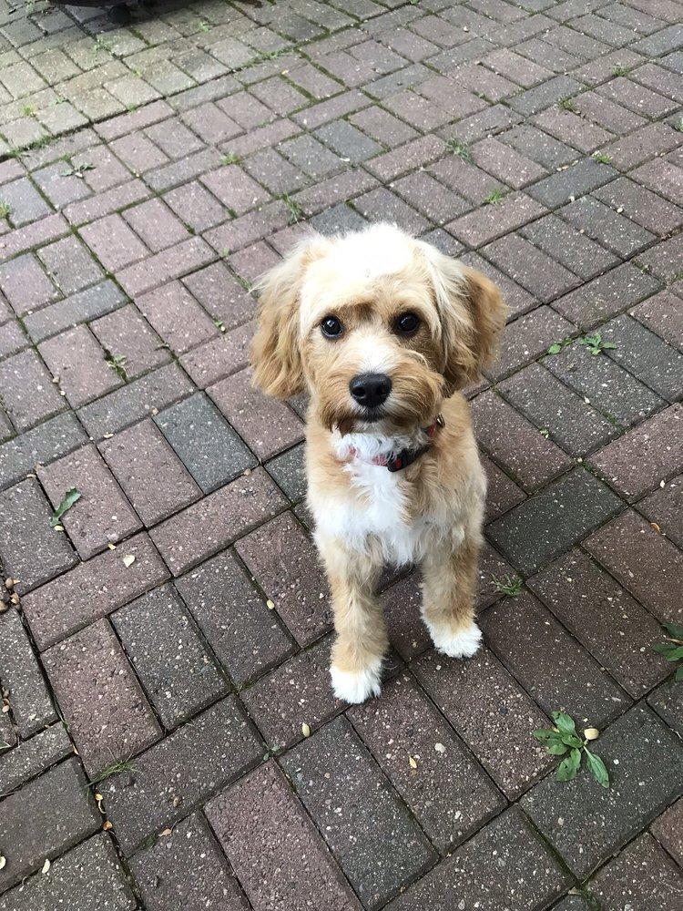 Look'N Fine Canine: E2290 Circle Dr, Waupaca, WI