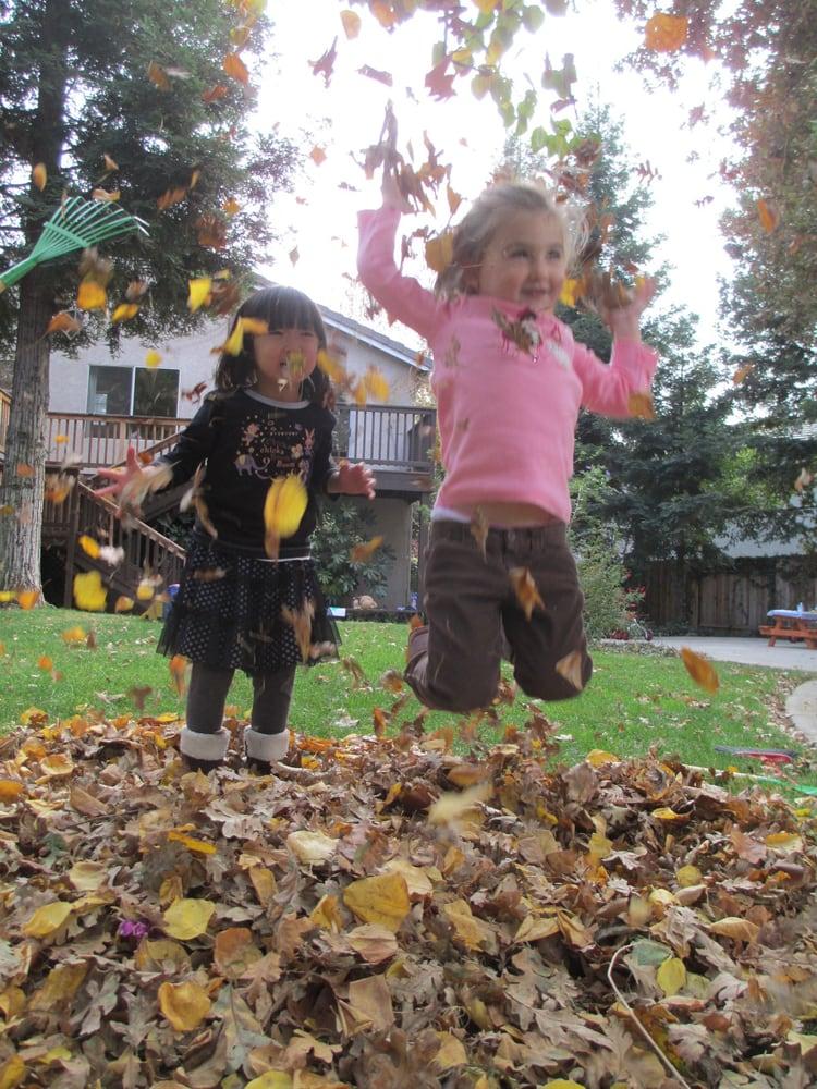 elk grove preschool tree preschool 幼稚園 elk grove ca アメリカ合衆国 電話 316