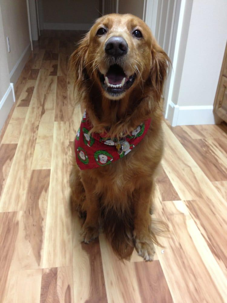 Dog Grooming On Go Vancouver Wa