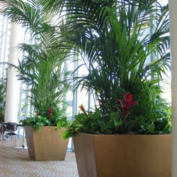 Photo Of Interior Plant Service   San Diego, CA, United States. Public  Spaces Awesome Design