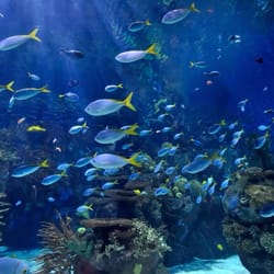 Photo Of The Pink Palace Aquarium Los Angeles Ca United States