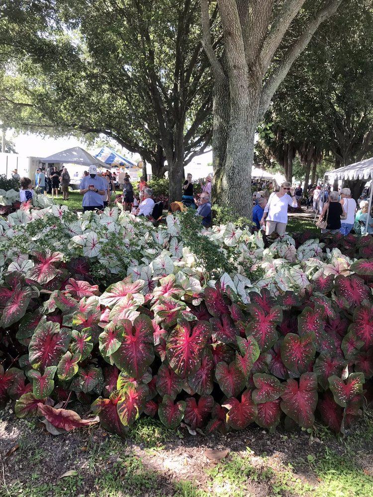The Caladium Festival: 113 E Interlake Blvd, Lake Placid, FL