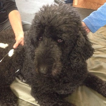 Therapy Dog Training Reno Nv