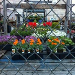 Brooklyn Whole Market Nurseries Gardening 641 Ovington Ave Bay Ridge Ny Phone Number Yelp