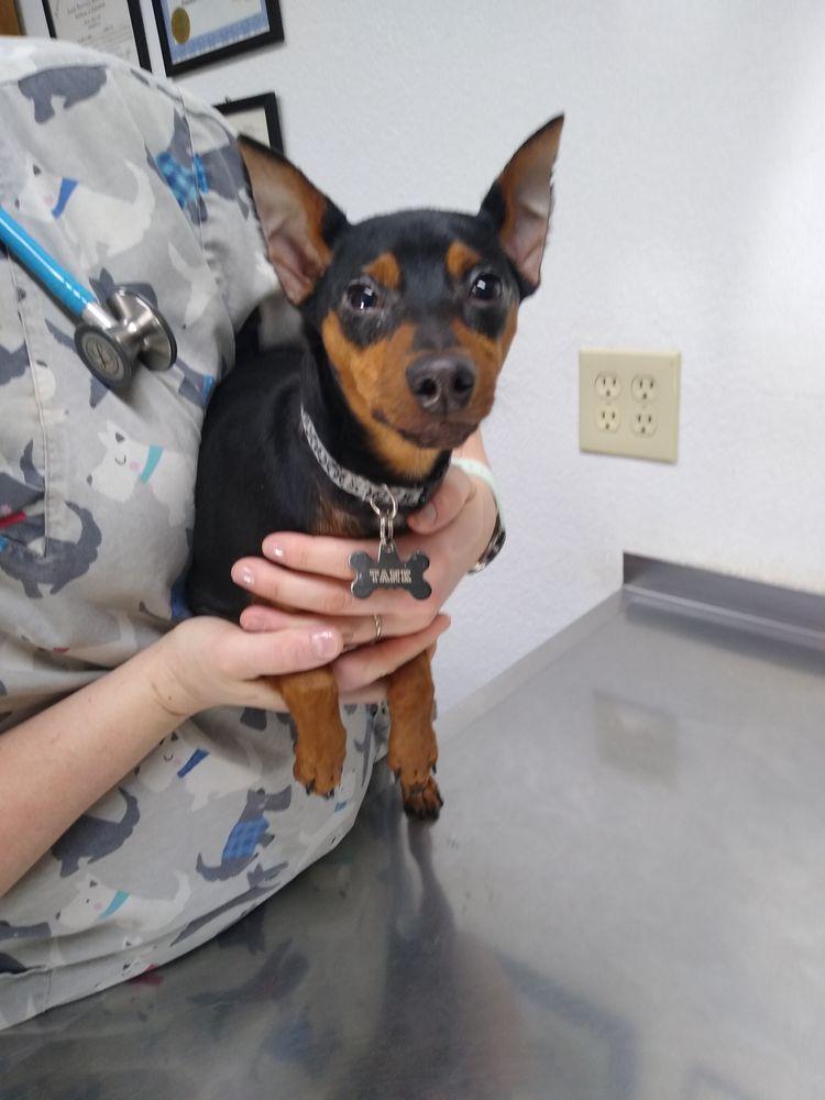 Powell Veterinary Service: 25505 County Road 53, Kersey, CO