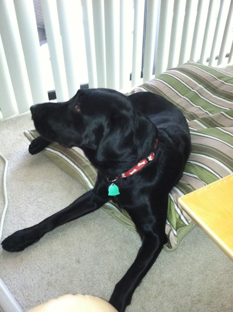 Happy Dog Inn: 3219 Russell Rd, Green Cove Springs, FL
