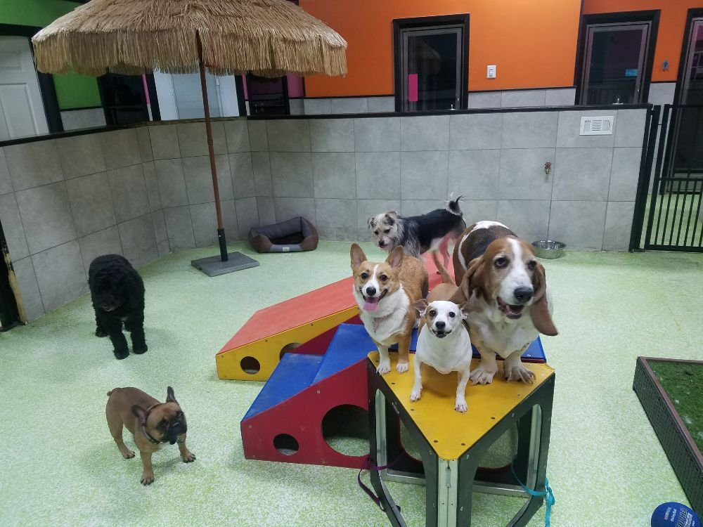 Fluffy's Pet Resort: 6900 South Fwy, Fort Worth, TX