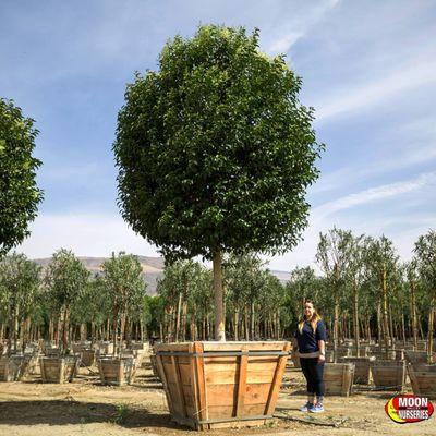 Moon Valley Nurseries 13040 W Cottonwood St Surprise Az Plants Trees Etc Whole Mapquest