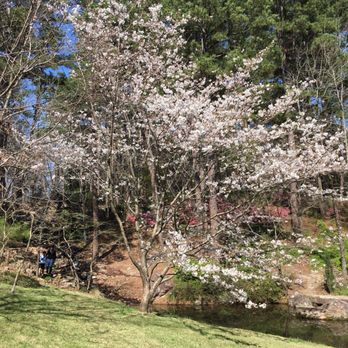 Photo Of Garvan Woodland Gardens   Hot Springs, AR, United States. Cherry  Blossom