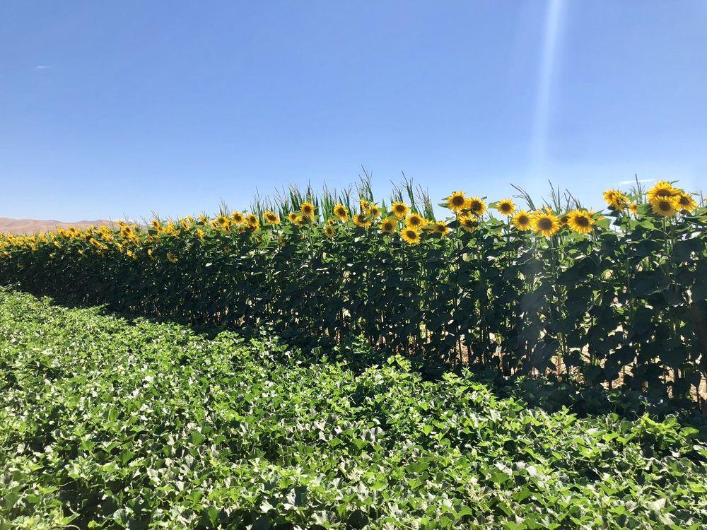 Del Bosque Farms: 51481 W Shields Ave, Firebaugh, CA