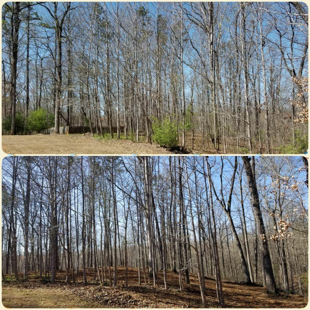 McAbee Tree Care: Ball Ground, GA