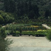 Photo Of Drought Resistant Nursery Carmel Ca United States