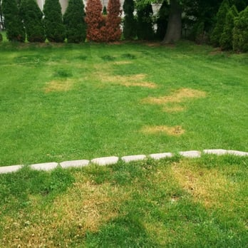 Photo Of TruGreen Lawn Care   Randolph, NJ, United States. They Grass Was