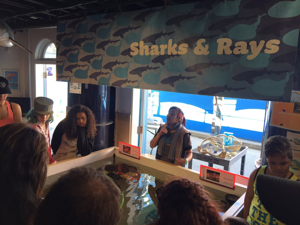 Gotta Love Seeing A Shark Or Ray In Person Yelp