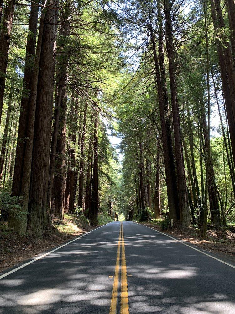 Navarro River Redwoods State Park: Albion, CA