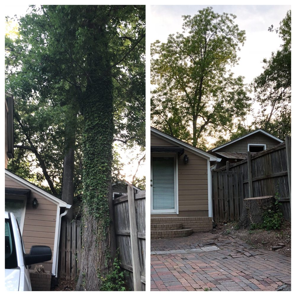 Affordable Carolina Tree Service: 520 Fallaw Rd, Gaston, SC