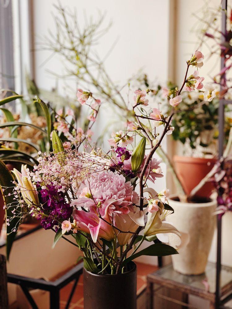 Chrysanthemum Rare Teas & Flowers