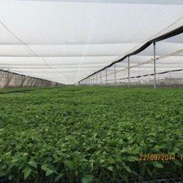 Viveros comalle 13 fotos viveros y jardiner a for Viveros frutales chile