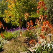 ... Photo of Secret Garden Landscapes - Moraga CA United States & Secret Garden Landscapes - 16 Photos \u0026 13 Reviews - Landscaping ...