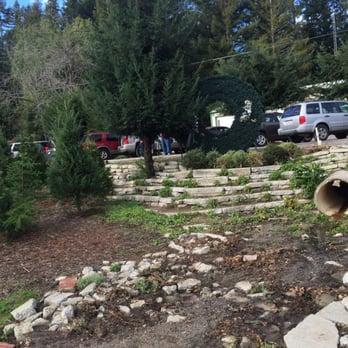Photo of Patchen California Christmas Tree Farms - Los Gatos, CA, United  States. - Patchen California Christmas Tree Farms - 45 Photos & 39 Reviews