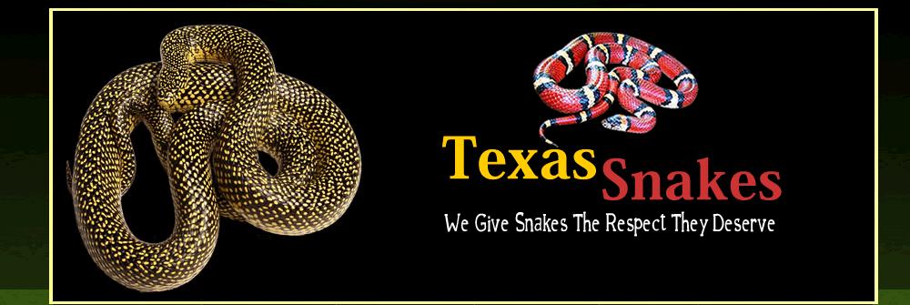 Texas Snakes & More: Houston, TX