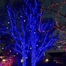 photo of christmas at the zoo indianapolis in united states