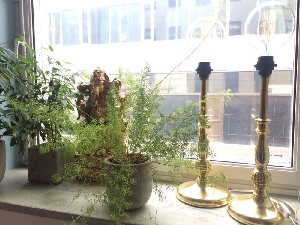 gröna växter stockholm