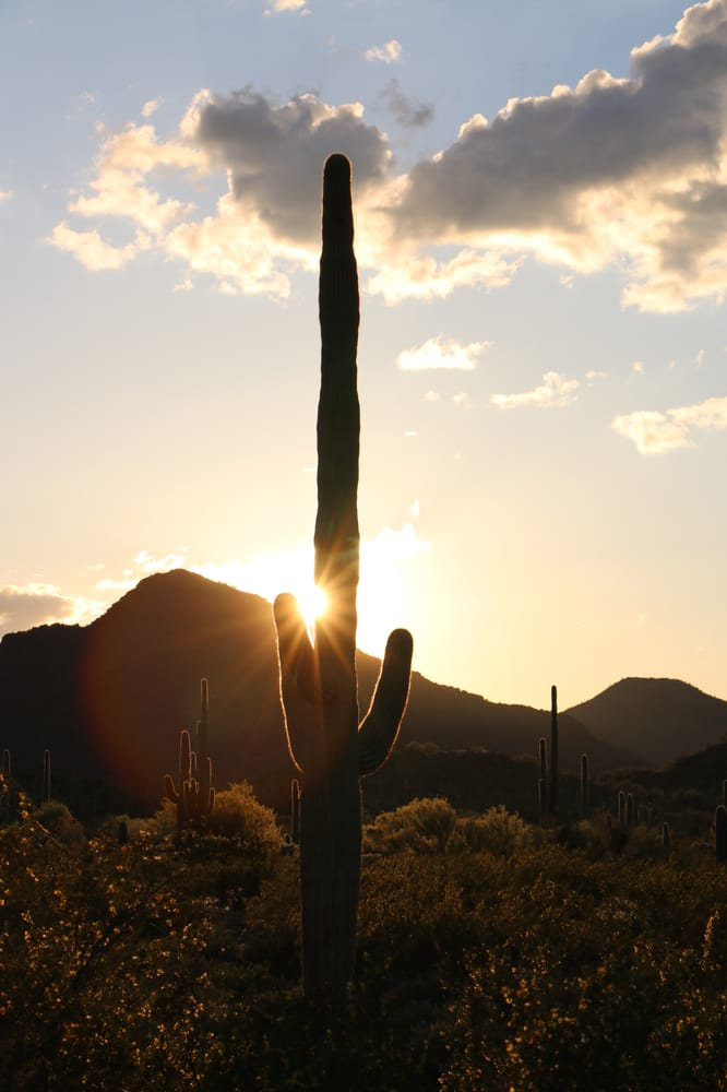 Organ Pipe Cactus National Monument: 10 Organ Pipe Dr, Ajo, AZ