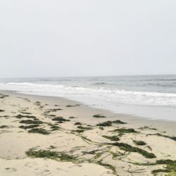 Photo Of Zmudowski State Beach Moss Landing Ca United States