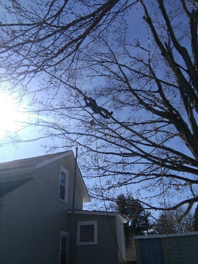 feutis tree service: Angelica, NY